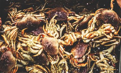Catch and Eat Fresh Dungeness Crab