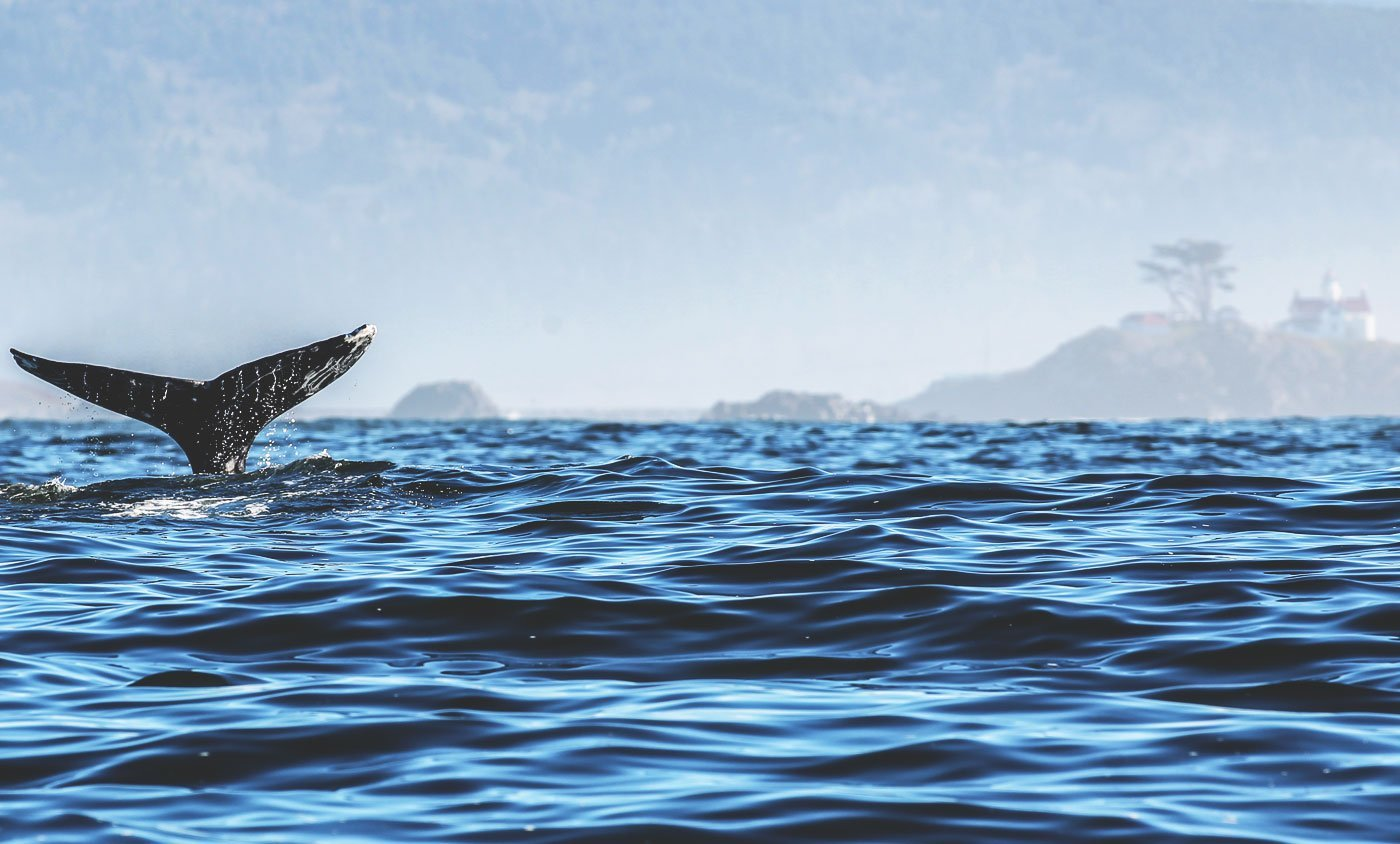 Whale watching in Del Norte County, California