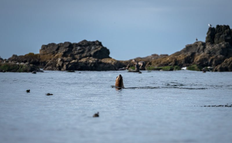 Whales can been seen at the Castle Rock Wildlife Refuge area in Crescent City, CA