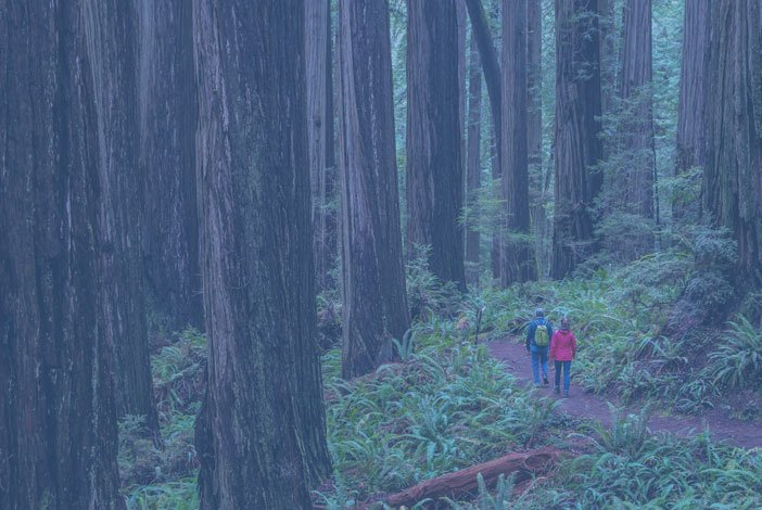 Hiking at the Redwoods National Park in Del Norte County, California - The Redwoods Coast