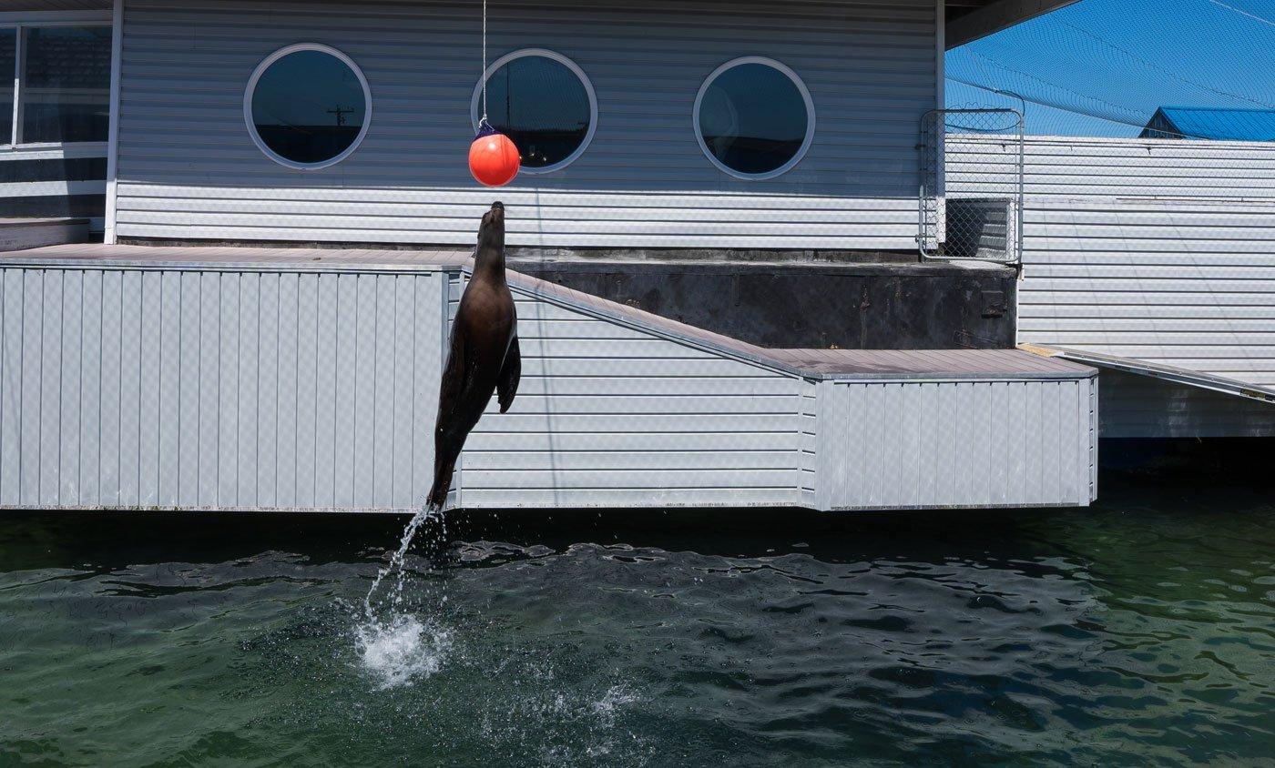 Ocean World Aquarium Crescent City, CA