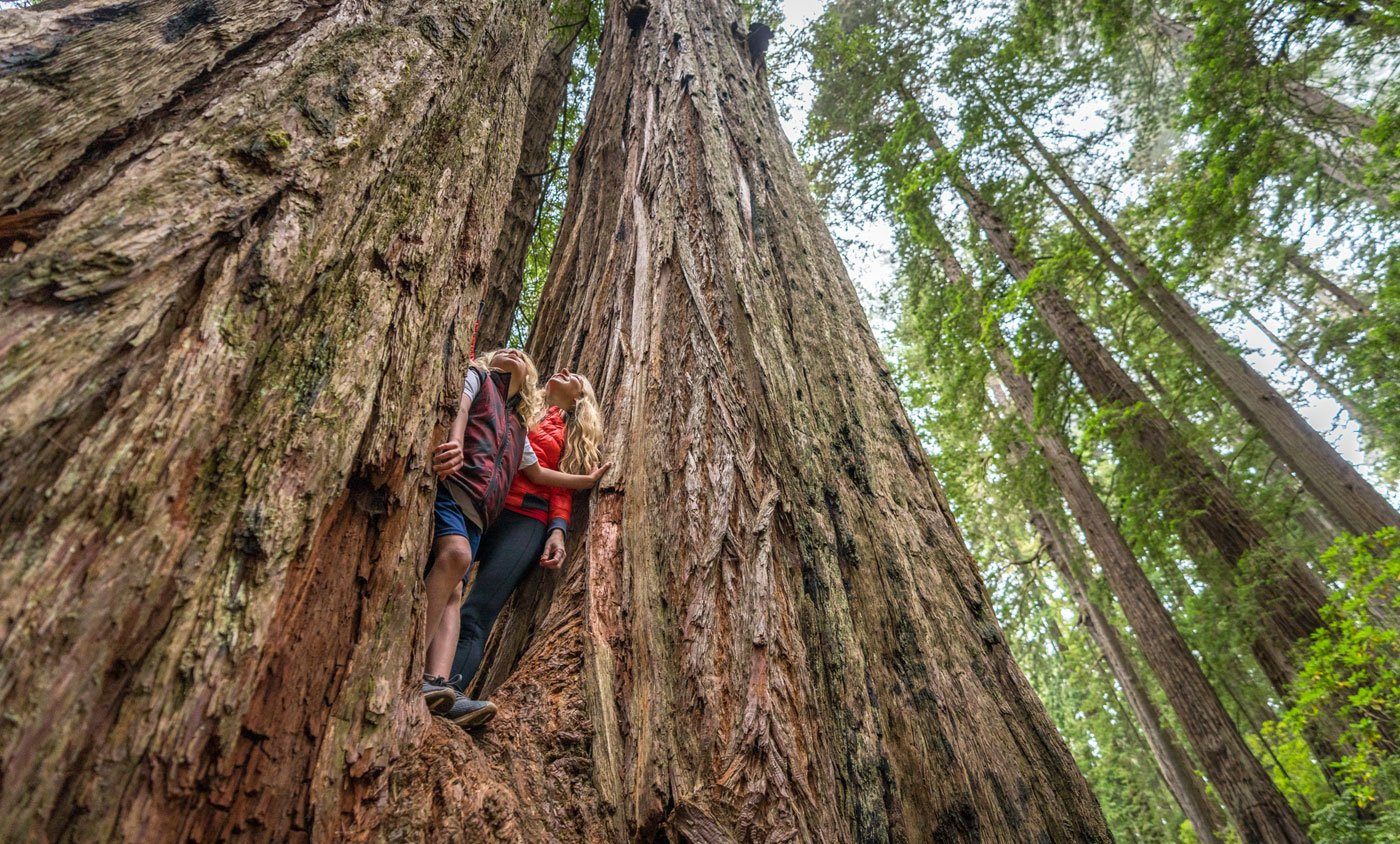 California Redwoods National Park - Del Norte County