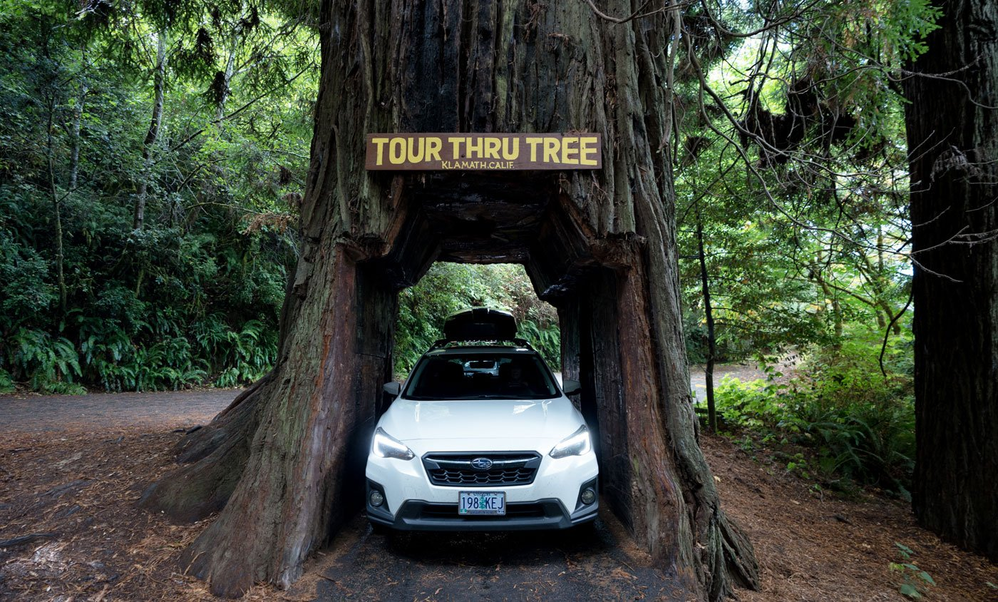 Drive Thru a Redwood Tree in Del Norte County, CA