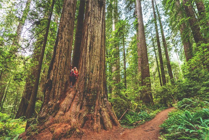 Things to do in Del Norte County, California - The Redwoods Coast