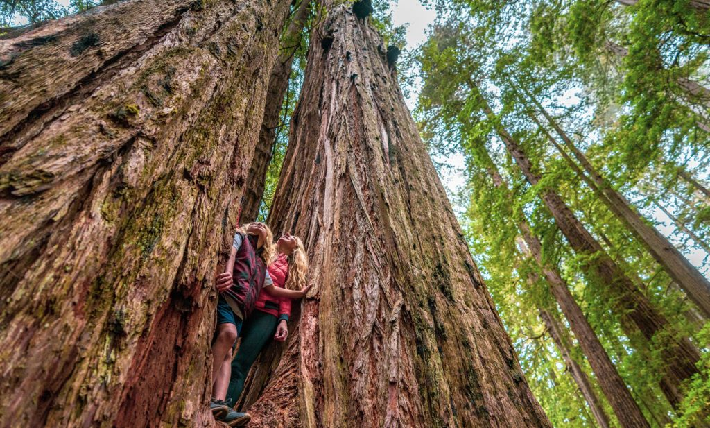 Redwood National and State Parks - Redwood Forest