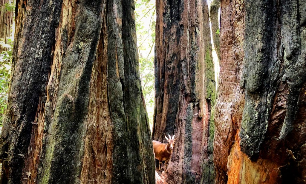 Pet Friendly Places To Stay Play In Crescent City Visit Del Norte County