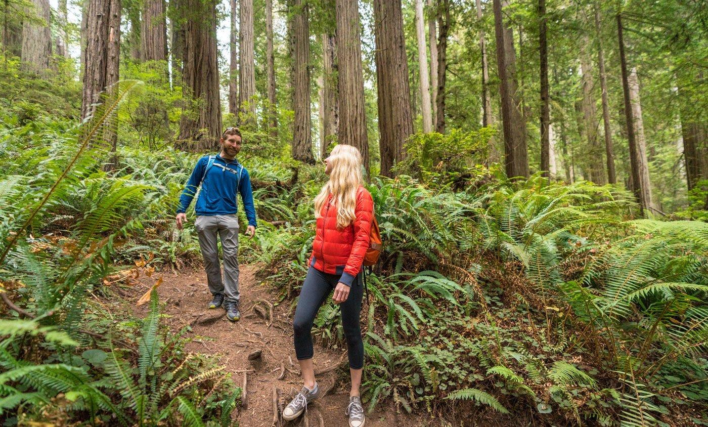 Damnation Creek Hiking Trail in Crescent City California
