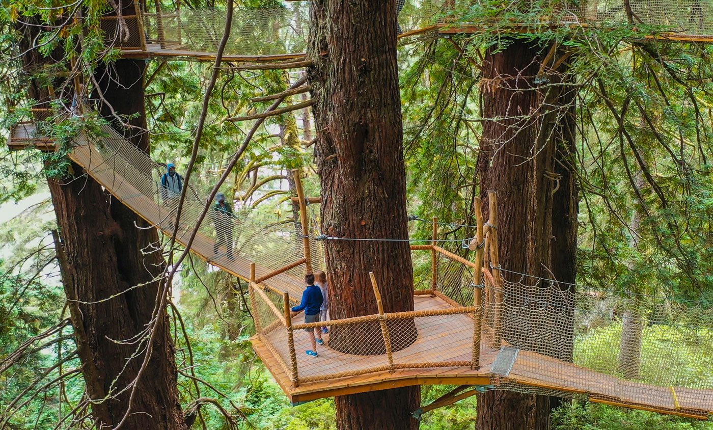 Scale a Redwood Sky Walk Up to 100-feet High at the Trees of Mystery's Redwood Canopy Trail