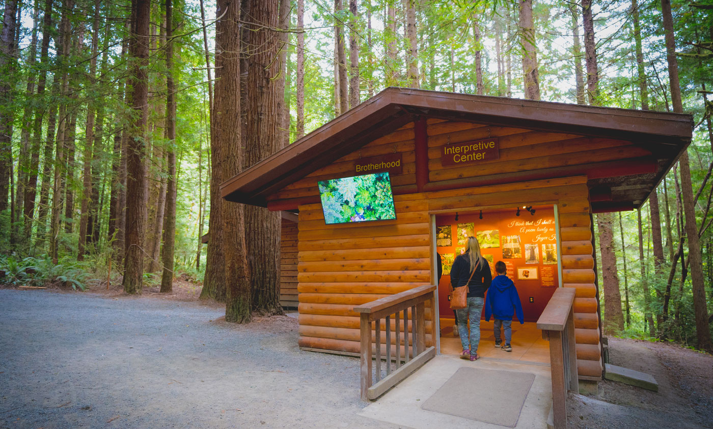 Wander into the Interpretive Center at the Trees of Mystery