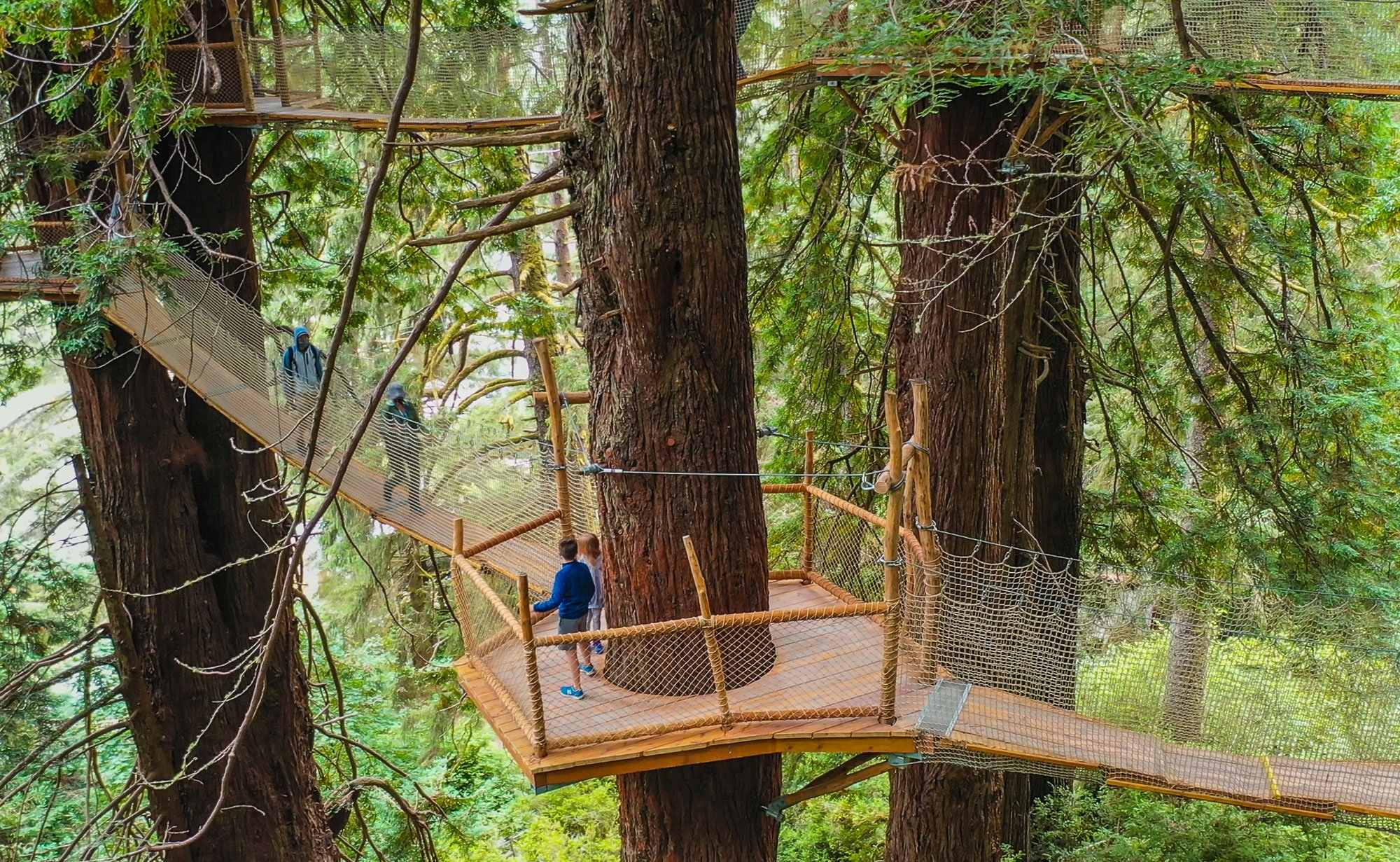 Stroll Up to 100-Feet High in a Redwood Tree Canopy Along the Redwood Canopy Trail at Trees of Mystery