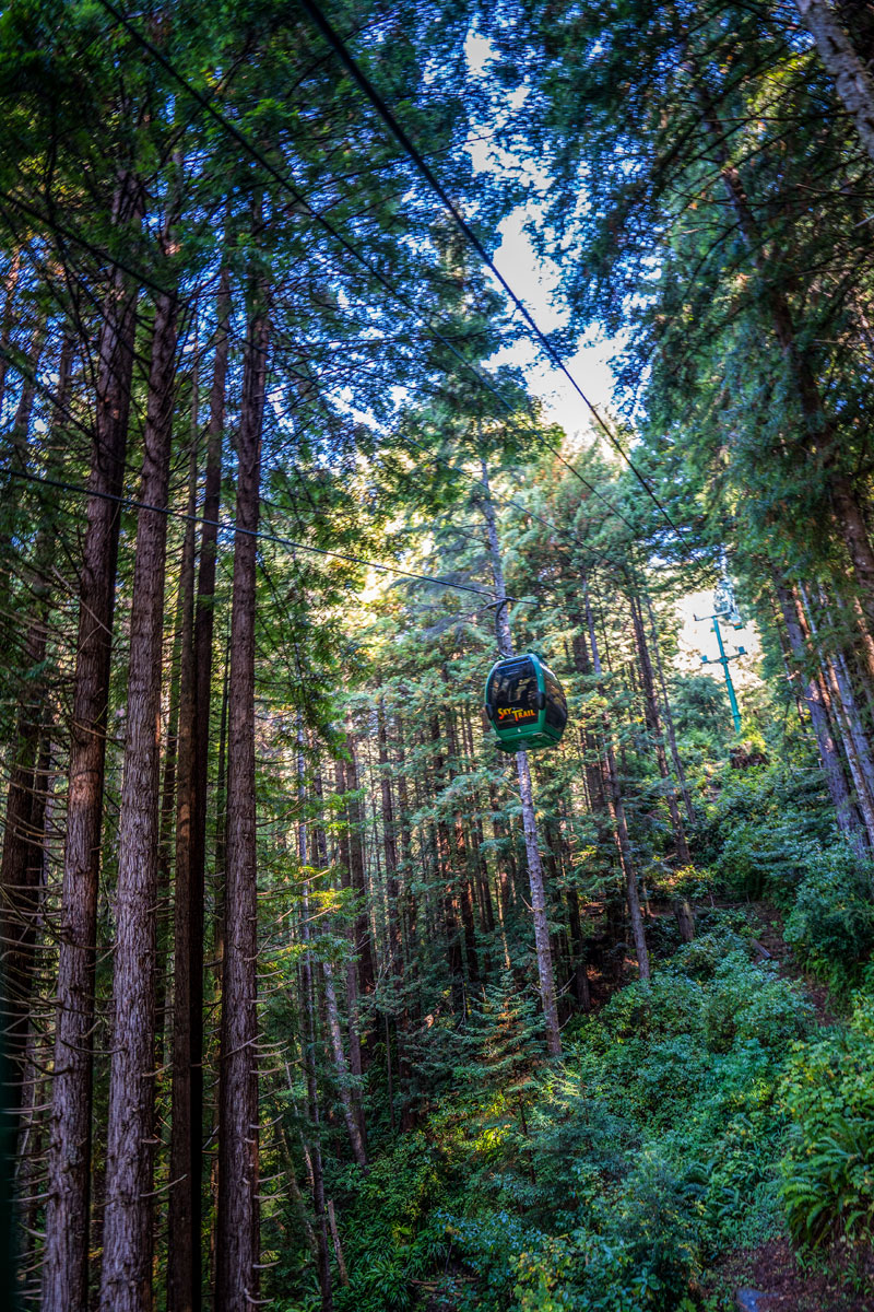 The SkyTrail Takes You Up to 1,500 Feet Above a Redwood Forest at Trees of Mystery