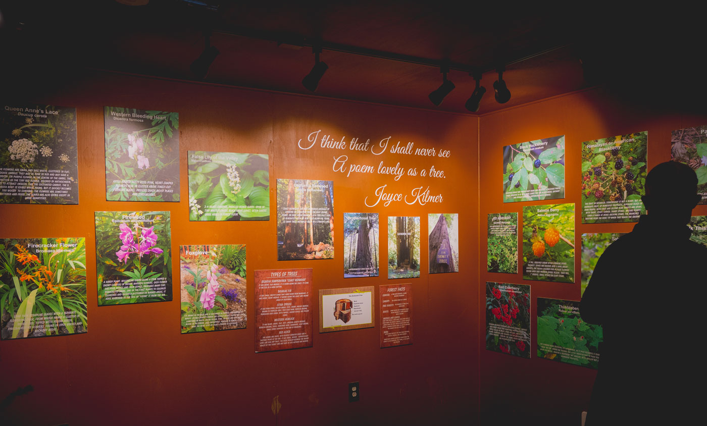 Inside the Interpretive Center at Trees of Mystery
