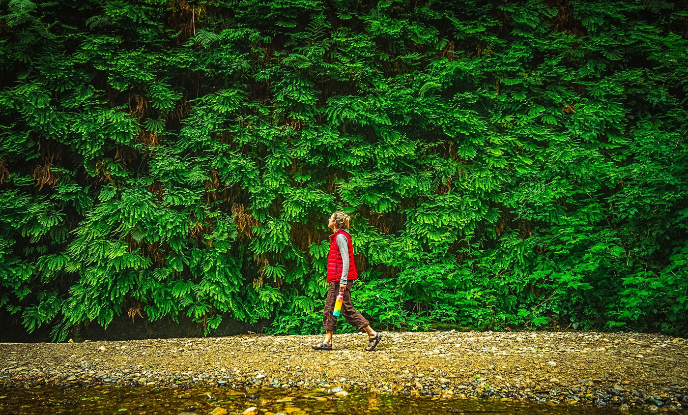 Fern Canyon in Prairie Creek Redwoods State Park. Photo by Nate Wyeth