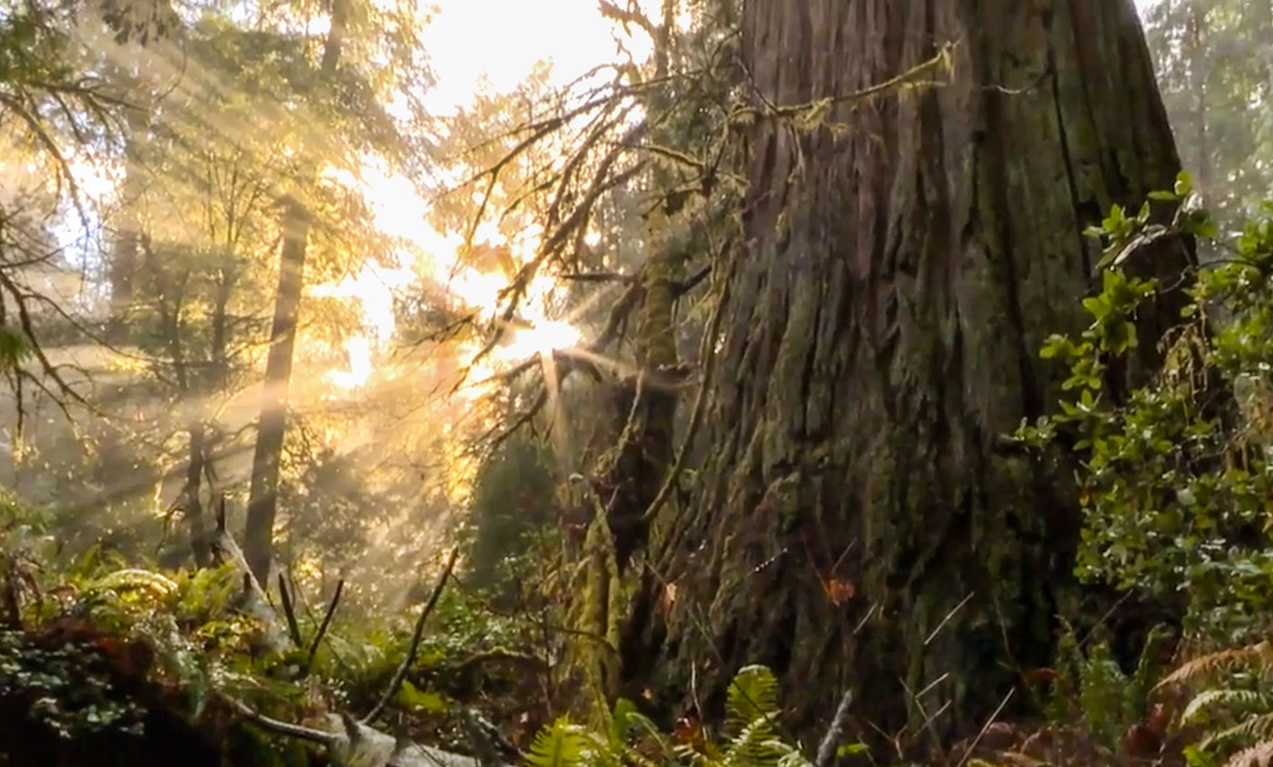 Mark Freeman for Oregon Outdoors, features a video of the Grove of the Titans