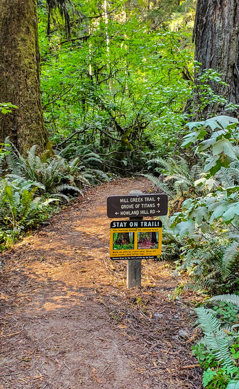 Trailhead to Grove of the Titans in Redwoods National Park