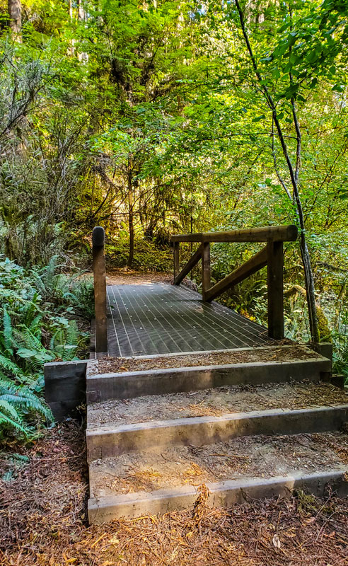 The New Walkway to Grove of the Titans Redwood Tree Grove in Del Norte County, California